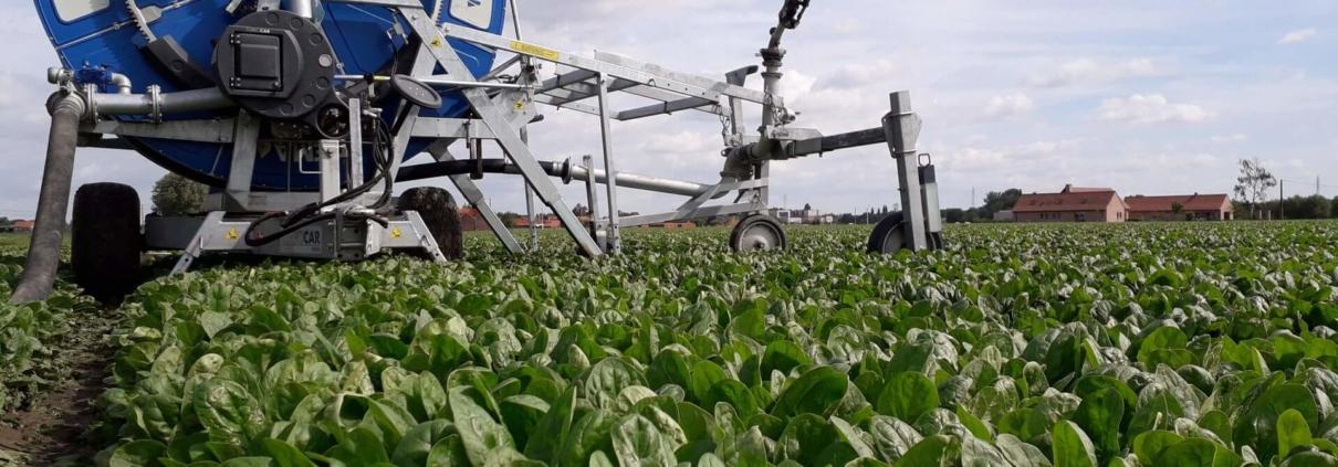 irrigatie van spinazie